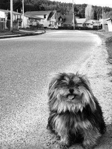 Poobah Guarding