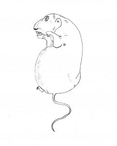 Human Rat - drawing by Harvey Dog 2020